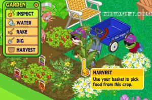 strawberry-harvest
